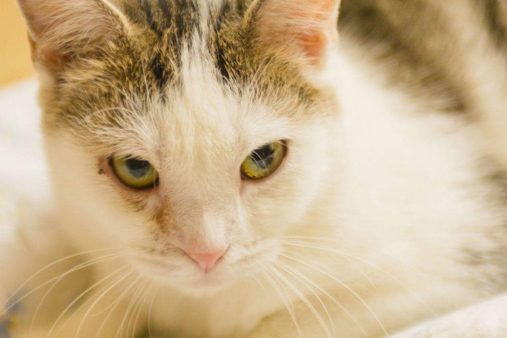 kotka ZOJKA - szuka kochającego domku na zawsze