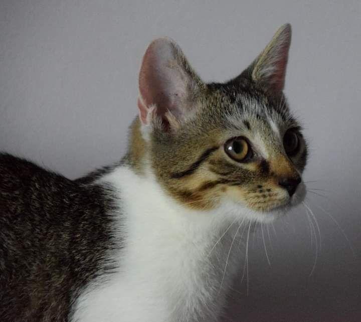 Mały kotek szuka rodziny