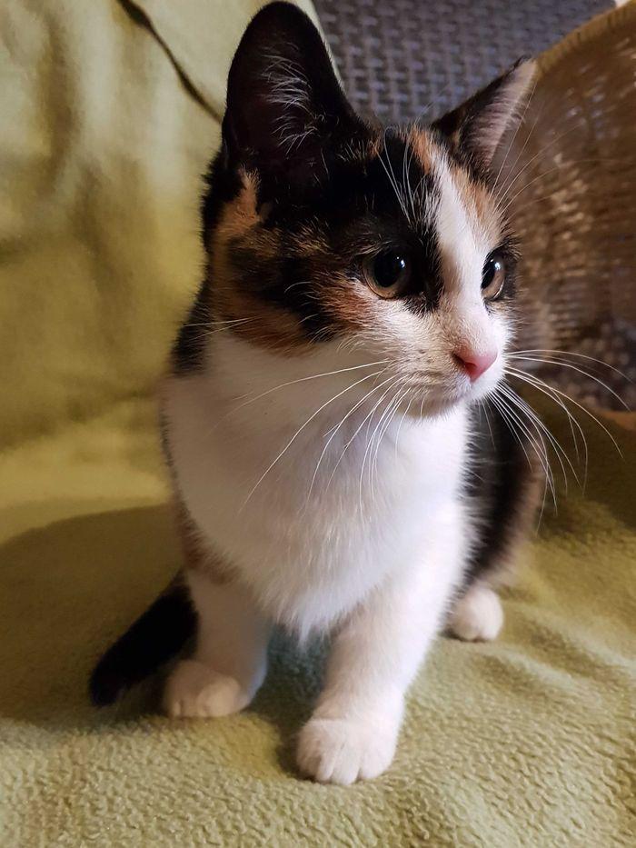 Koteczka Brendy, wspaniała, miła i grzeczna.