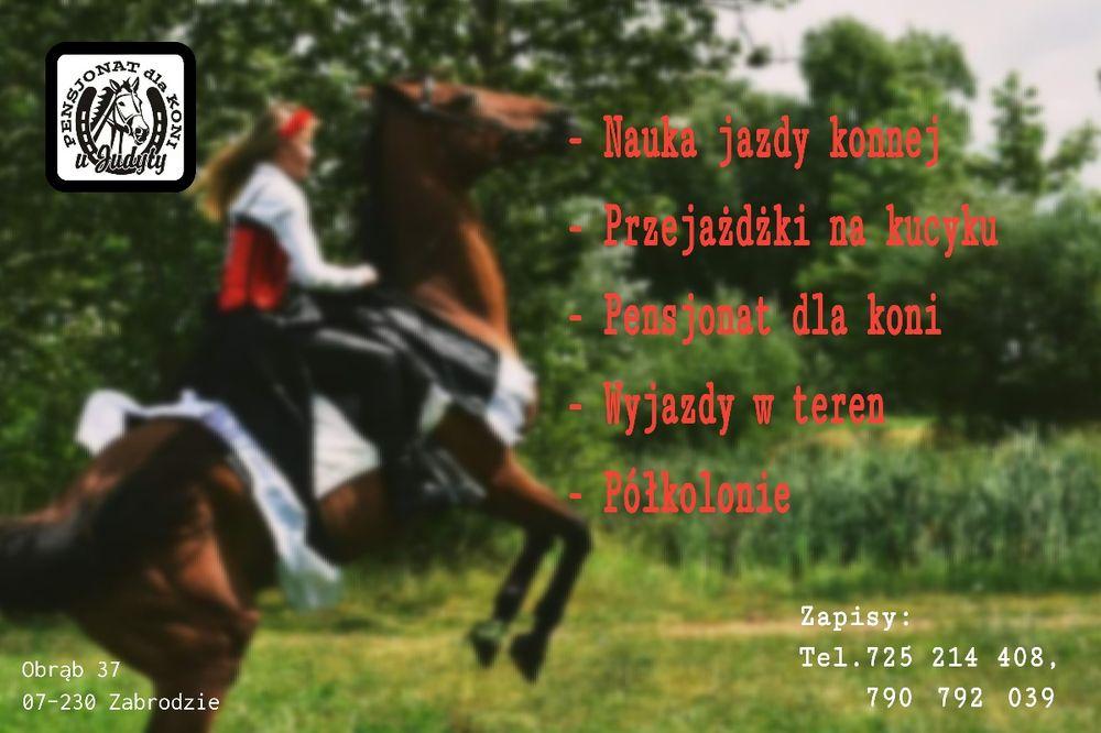 Boks dla konia