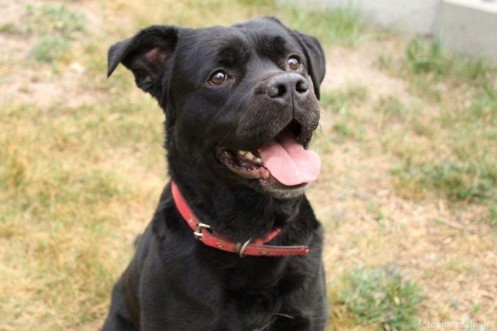 Roki to sympatyczny, silny pies lubiący zabawę piłeczkami.