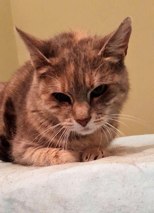 Fela cudowna kotka  szuka domu