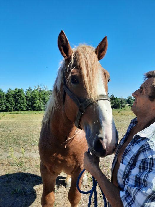 Sprzedam konie
