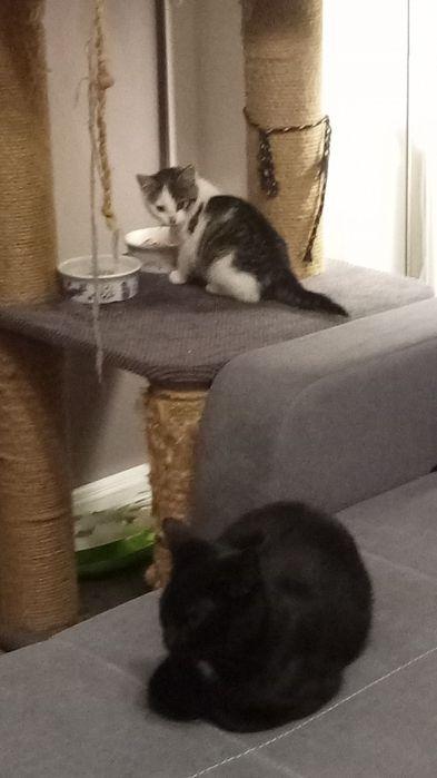Oddam kotki- 12 tygodni i mama
