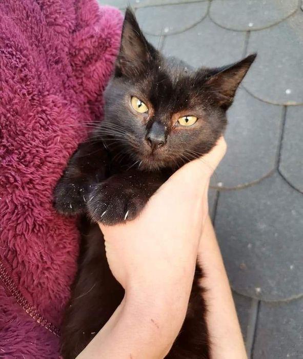 Do adopcji cudowna, czarna koteczka