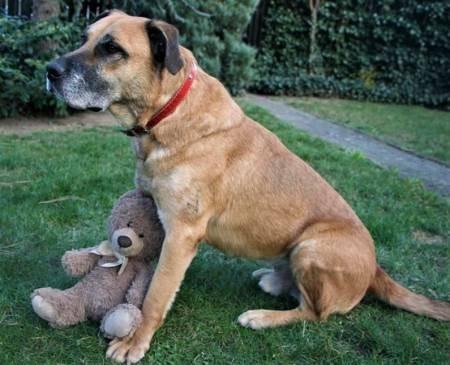 TARO - starszy, biedny, zrezygnowany psiak gaśnie z tęsknoty...