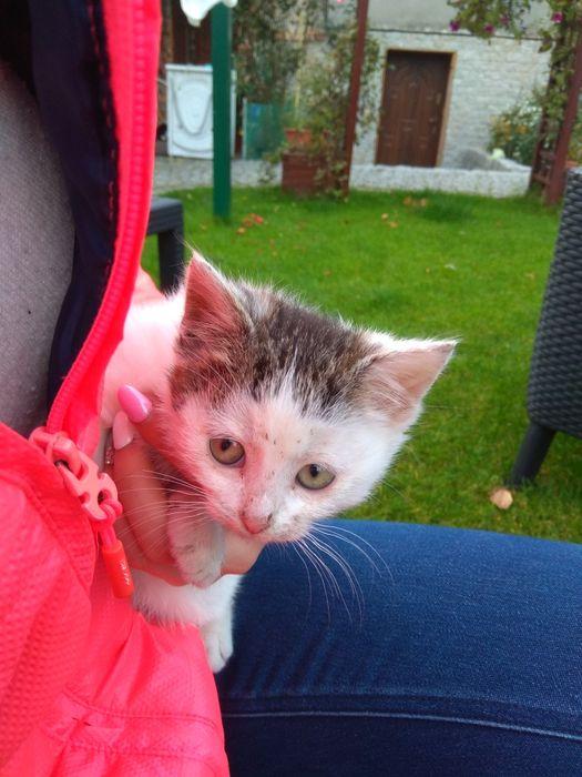 Oddam małego kotka
