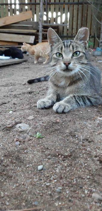 Śliczna Idefisia, młoda kotka szuka domu