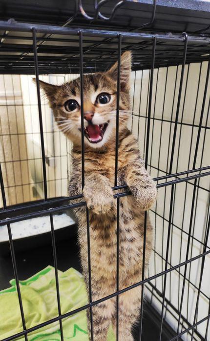 Wesoły kociak Borek do adopcji