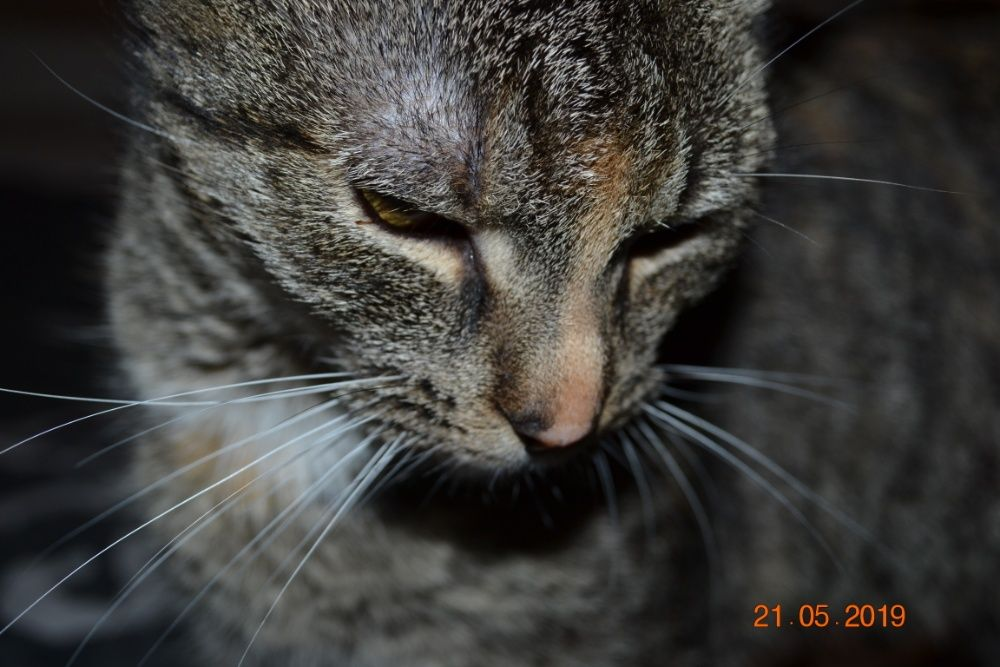 zaginęła młoda kotka