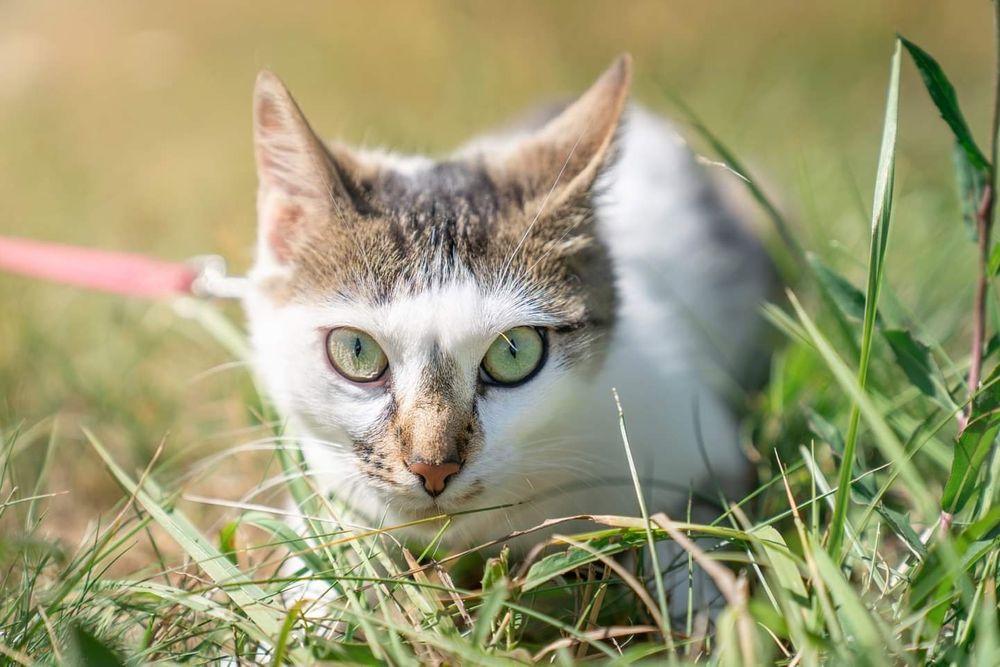 Motylek - miziasta koteczka czeka na adopcję