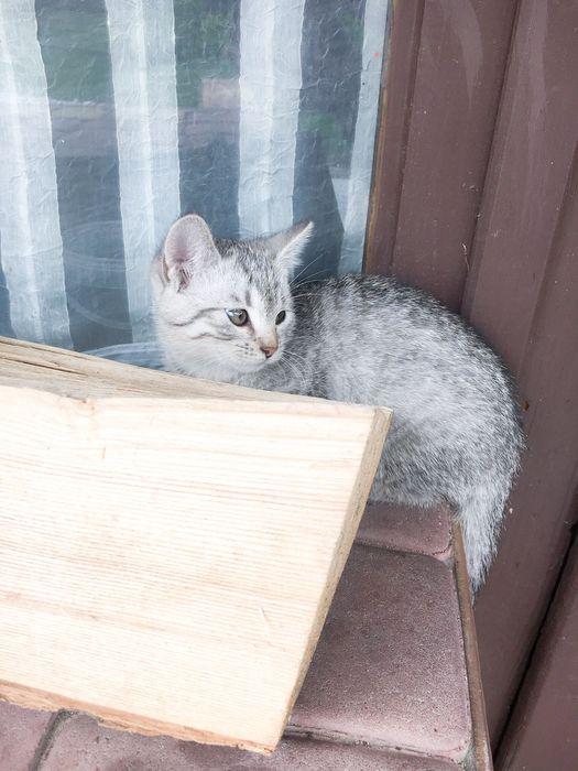 Mały kotek szuka domu