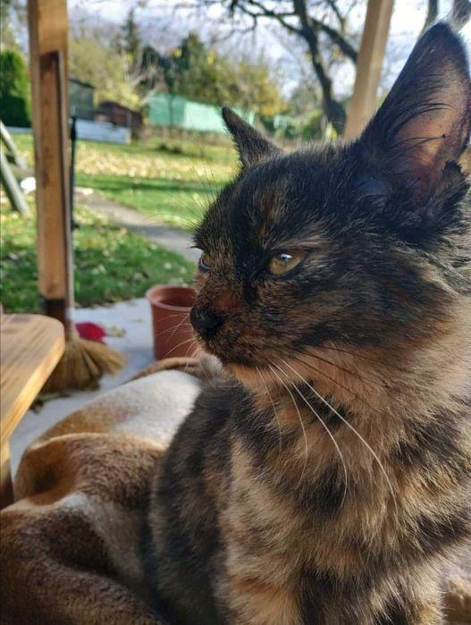 Roczna koteczka czeka na dom