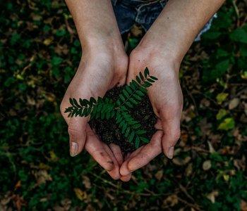 2-El-camino-hacia-la-sostenibilidad-1.jpg