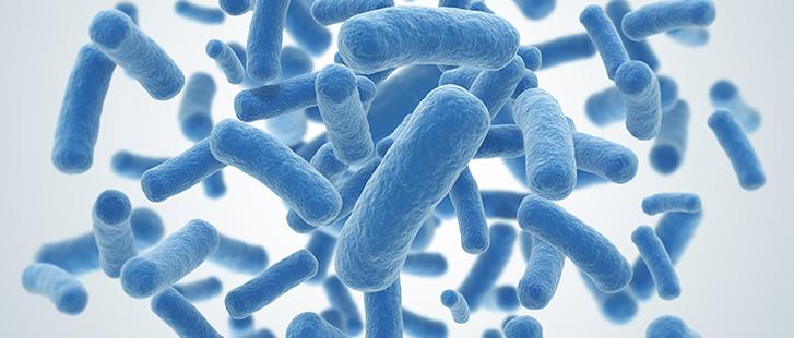 probioticos.png