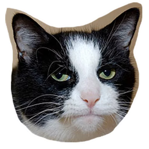 Sticker from Caticker pack