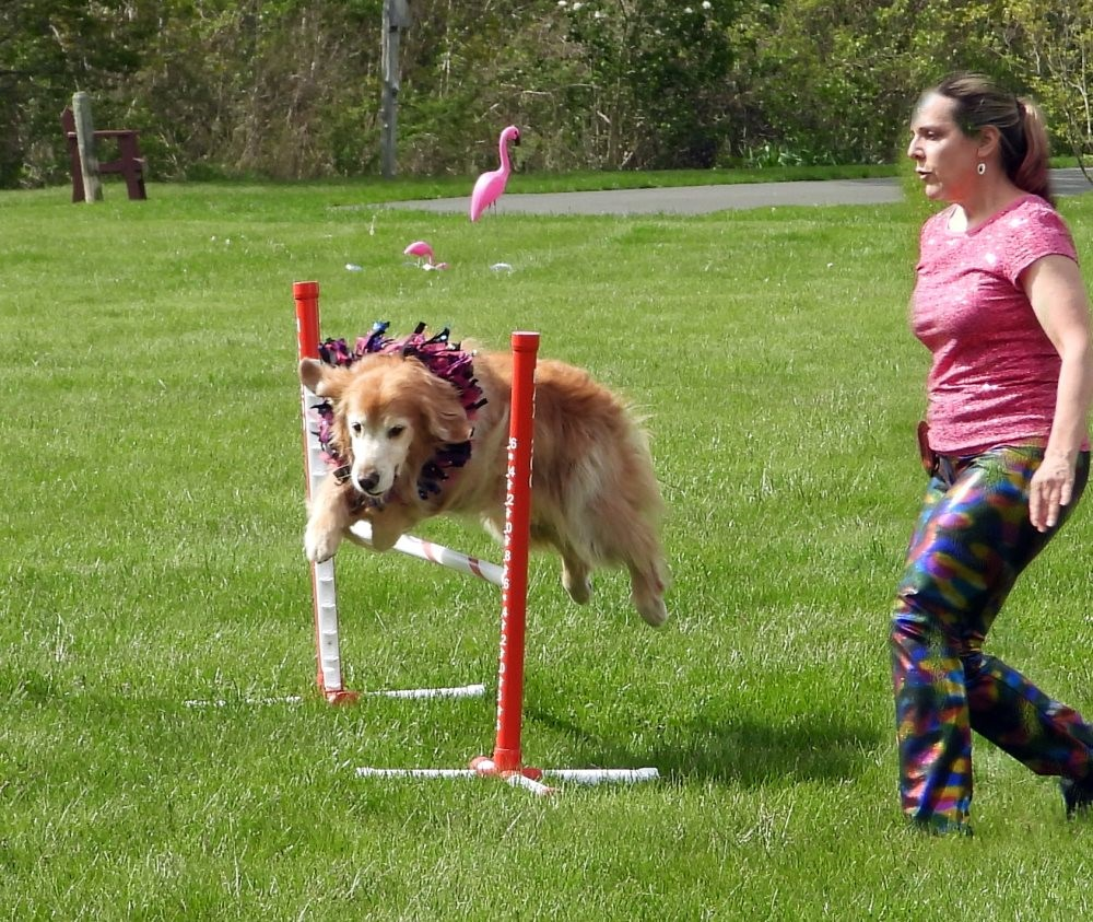 Residents were recently treated with a roaming dog show, where furry performers performed tricks and showed off their agility all across our campus!