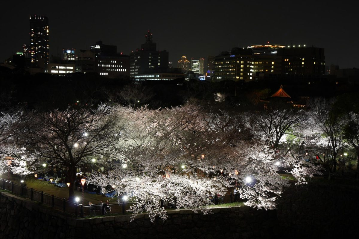 大阪城公園でのお花見の楽しみ方は?天守閣×桜の絶景が楽しめる!