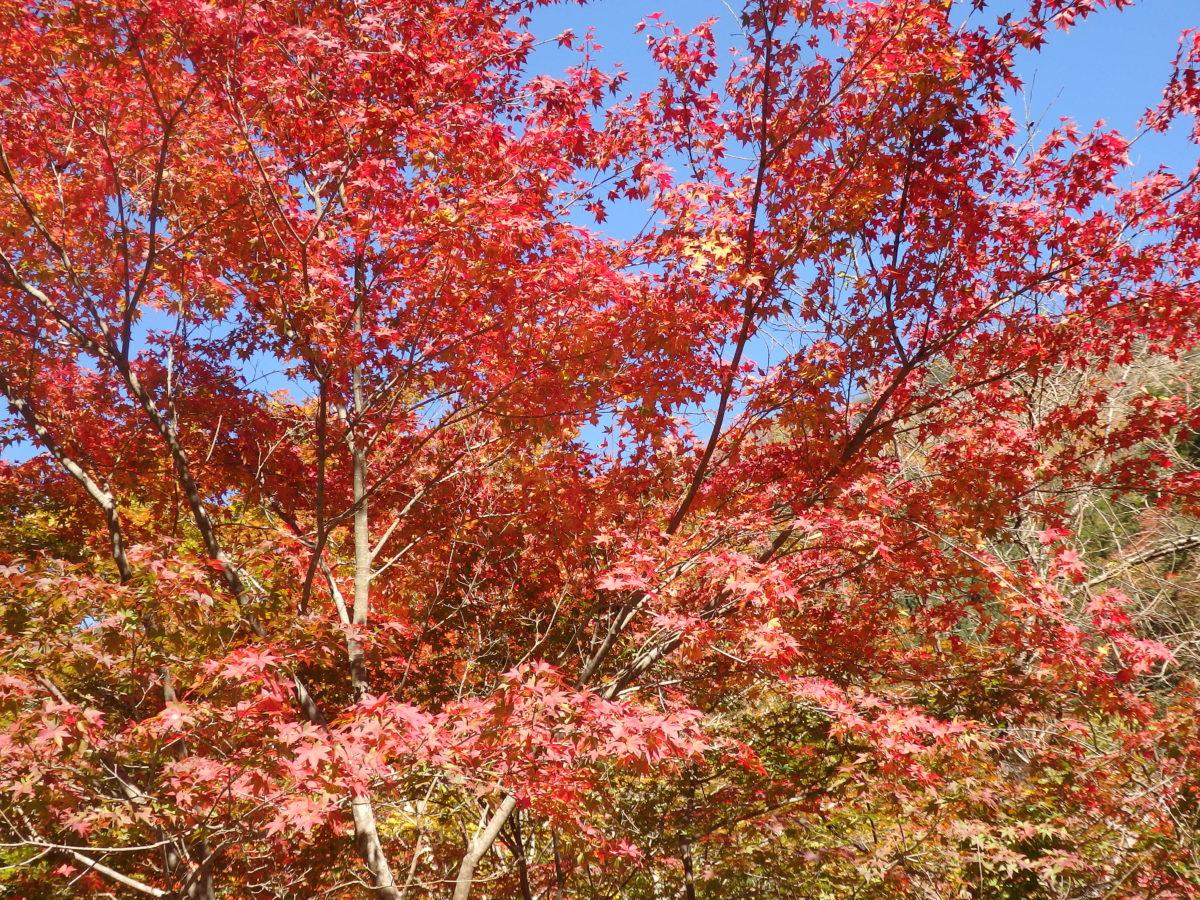【紅葉まつりに行こう】関東で秋の色彩を背景に催される「紅葉まつり」9選