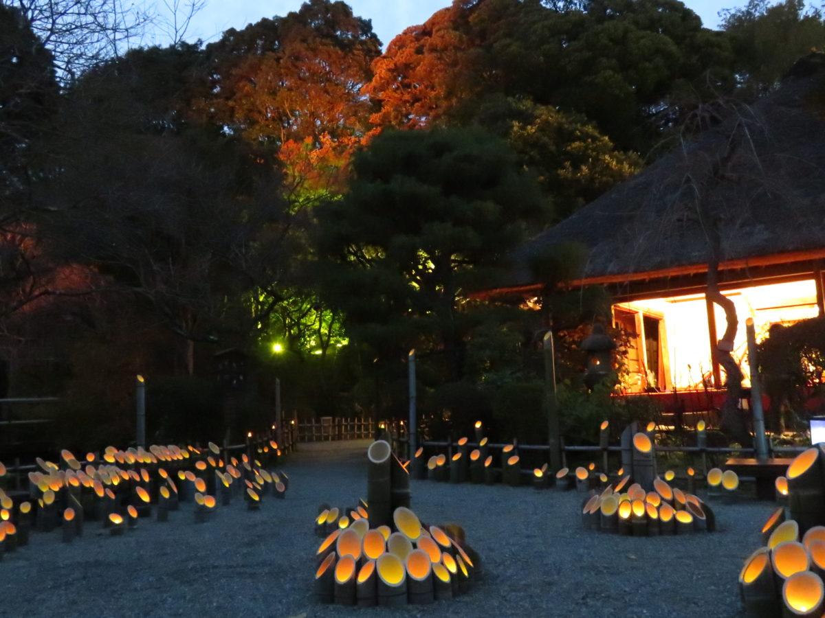 「京王百草園紅葉まつり」、来園者が自らライトアップ作業を行った後、暗闇に浮かぶ紅葉を鑑賞