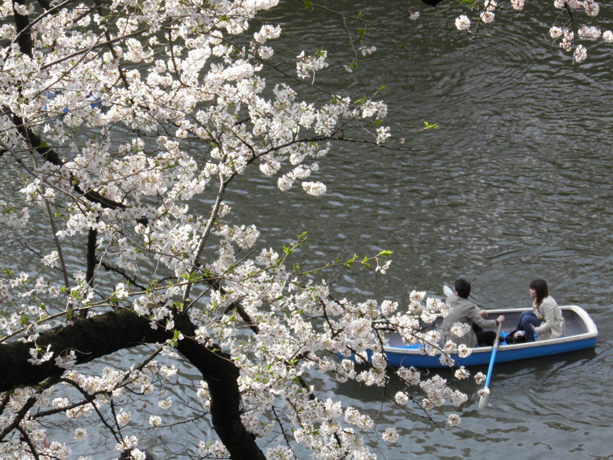 「千代田のさくらまつり」バスやボートからも眺められる江戸城内濠、千鳥ヶ淵の桜