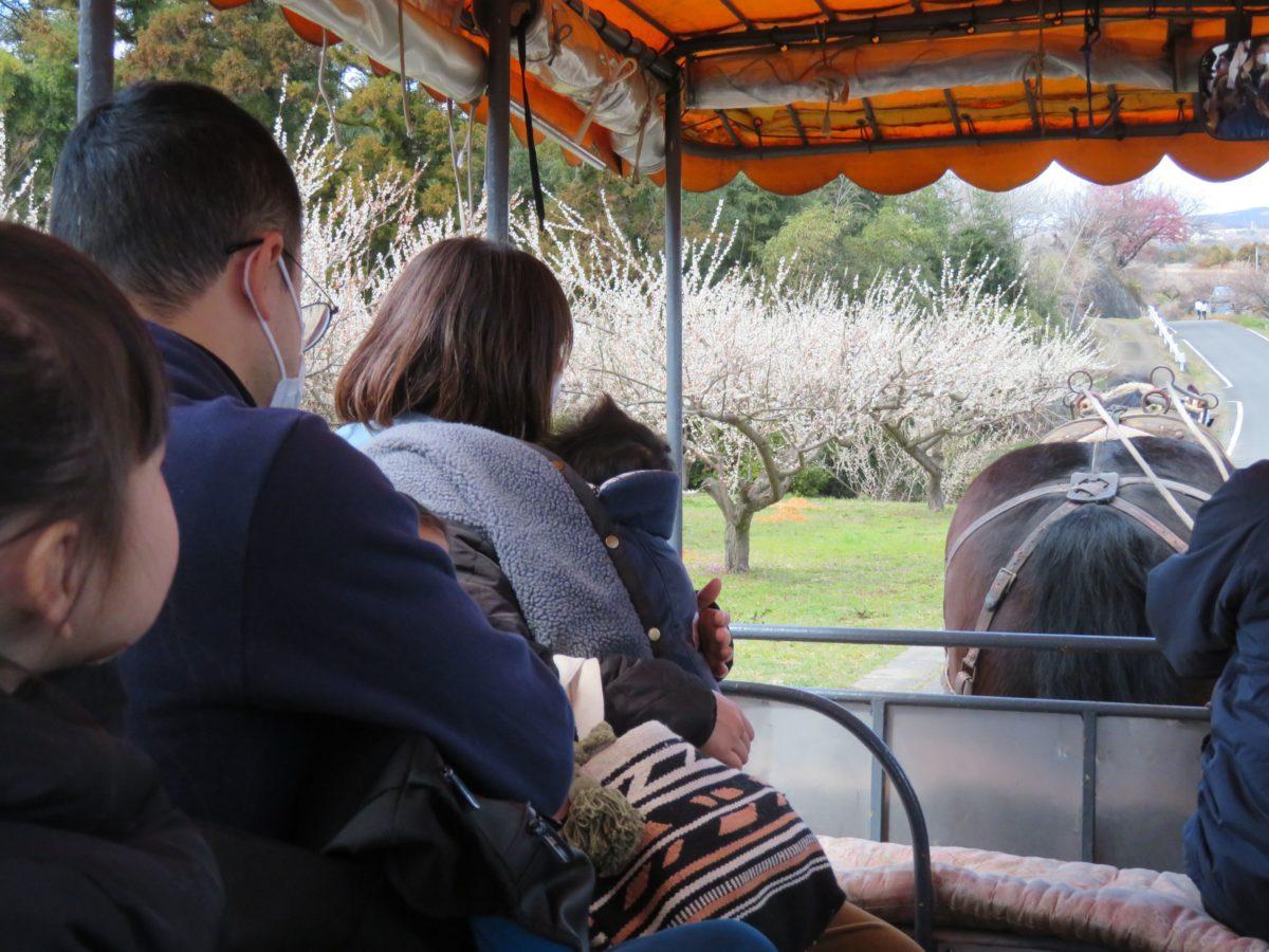 【榛名の梅祭り】トテ馬車での梅林散策、多彩なイベント、無料の梅食品配布などの魅力が満載