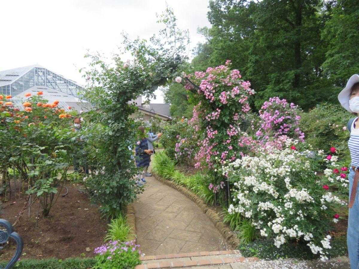 【とちぎ花センター・ローズフェスタ】花園には近郊の園芸家が育成した青バラ