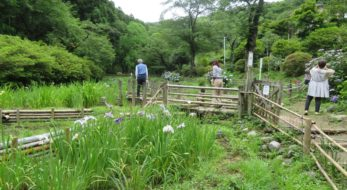 【吾妻公園花菖蒲まつり】初夏の装いをまとう絹織物の街、桐生の植物公園