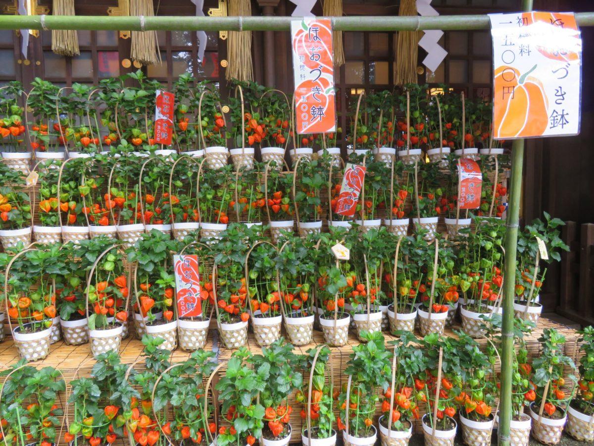 【検見川神社ほおづき市】朱色の風船で夏の化粧をつける本殿や狛犬