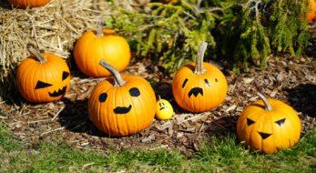まるでハロウィン?関係ない?日本のかぼちゃ祭り6選!