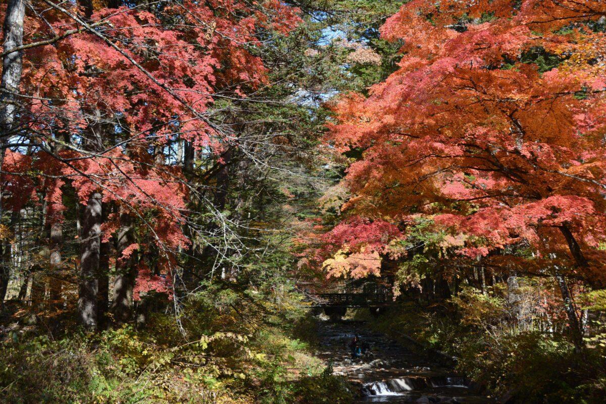【軽井沢紅葉まつり】浅間山の南麓の避暑地で一足早く秋を先取り
