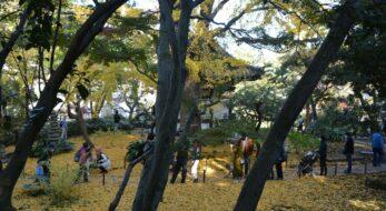 【紅葉の古建築公開】港町横浜で歴史と伝統を漂わせる三溪園を包む秋の彩り