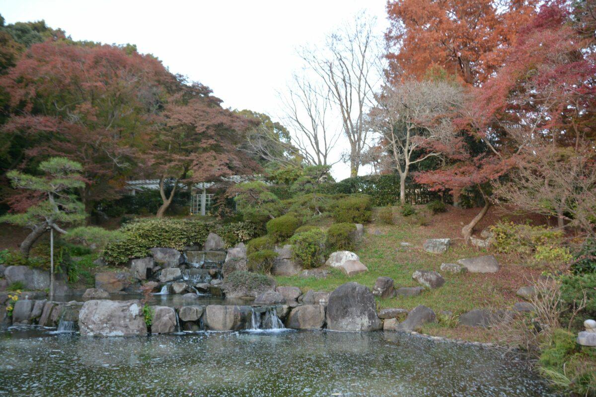 【須磨離宮公園の紅葉】港町神戸の西部で秋の彩りに包まれる植物園