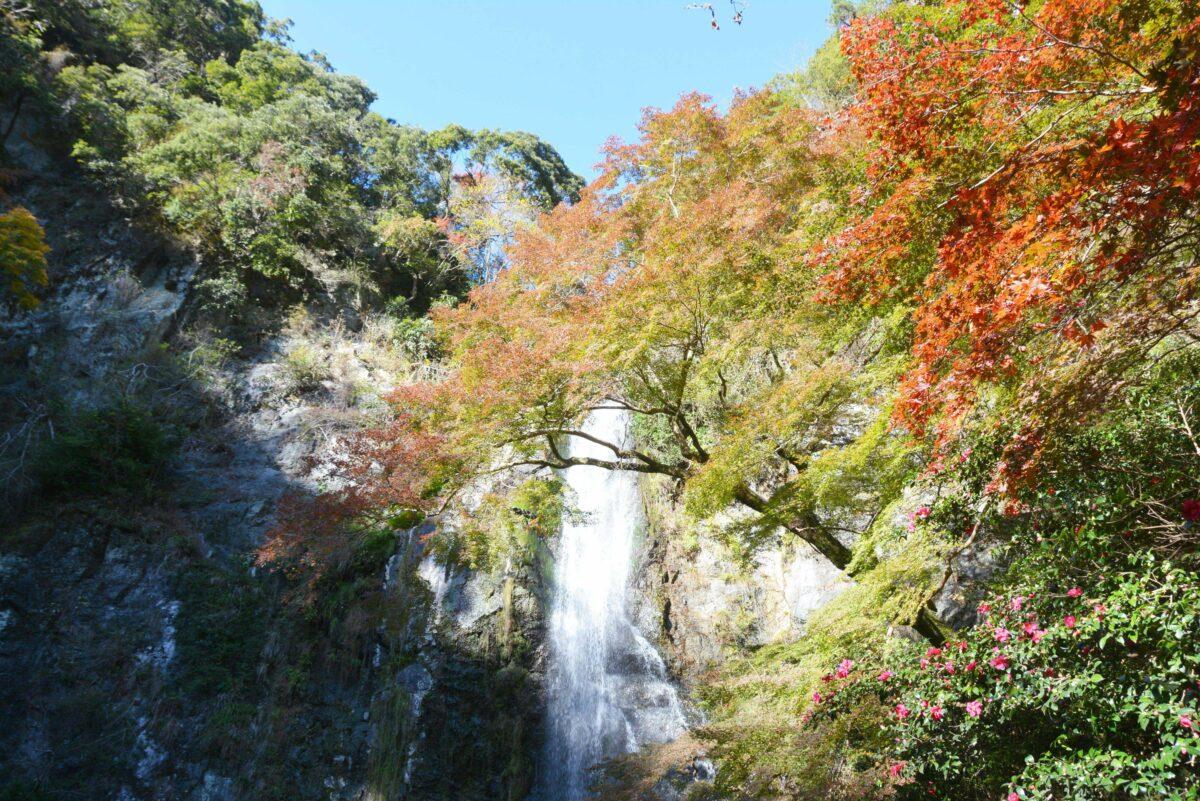 【箕面公園もみじまつり】ダイナミックな大滝に向かい秋の滝道をハイキング