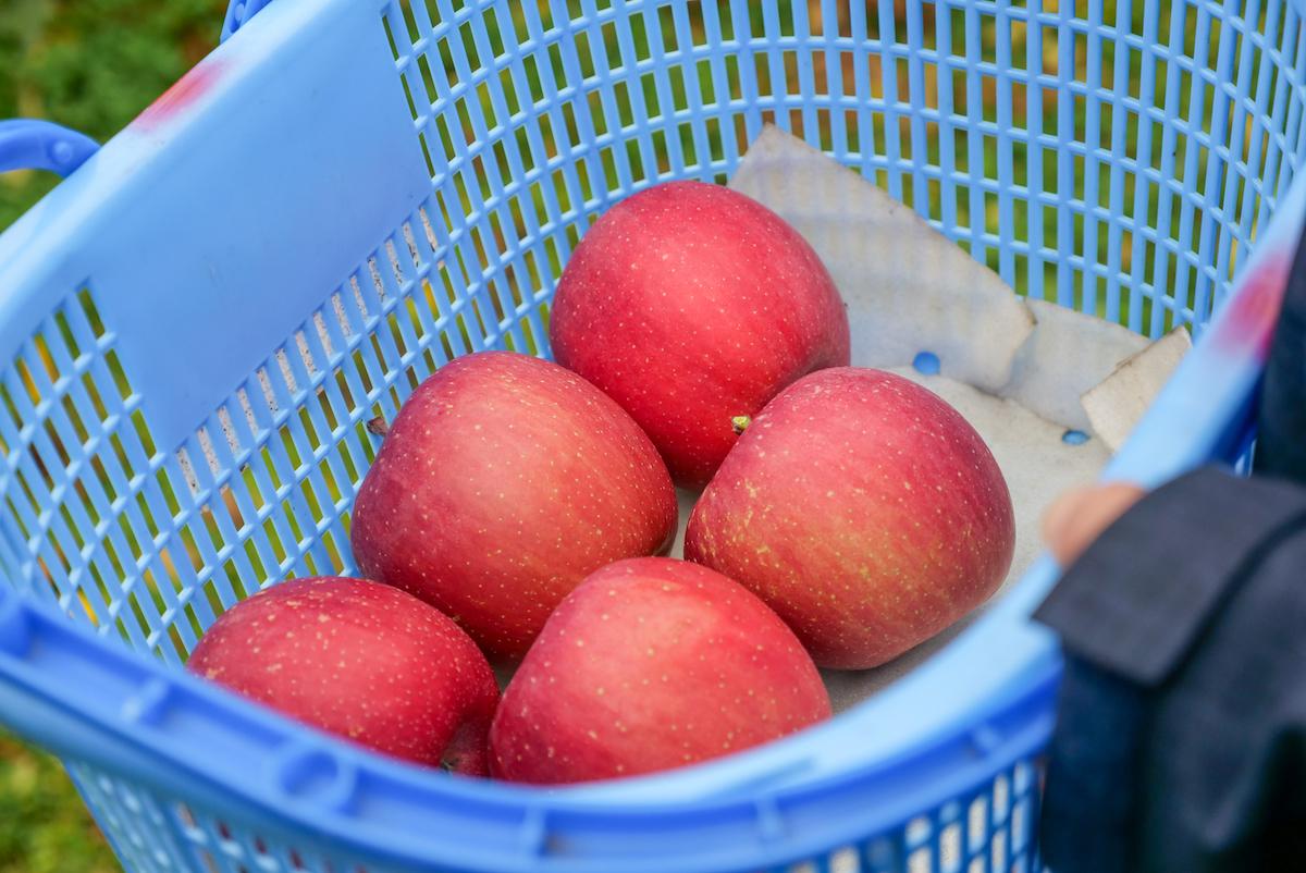 綺麗で美味しそうなりんごをリモート収穫
