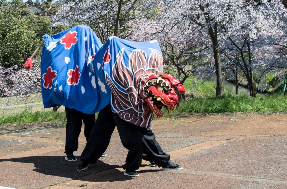 【大聖寺桜まつり】様々な獅子舞に遭遇!?石川県加賀市の大聖寺桜まつり