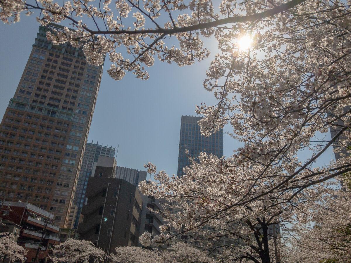 目黒川(五反田駅〜旧東海道・品川橋)