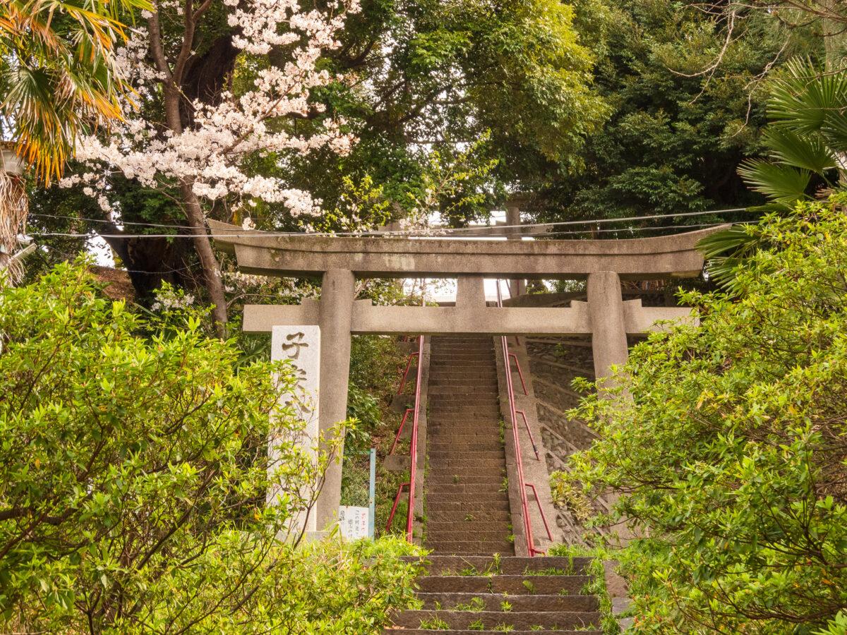 ねがた桜みち(子安八幡神社)