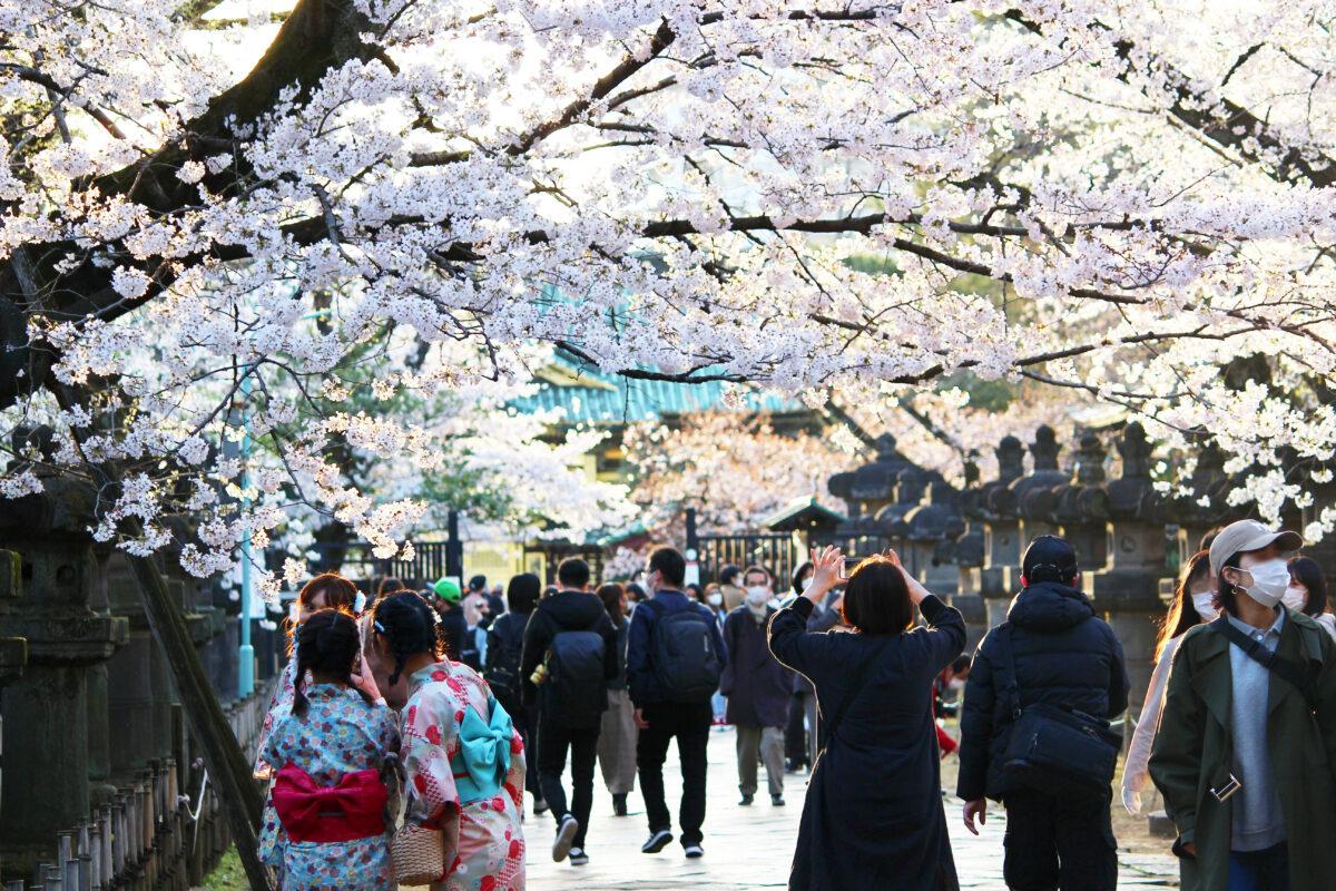 上野恩賜公園の桜、今年は歩いて見よう!園内の桜見どころスポットも紹介
