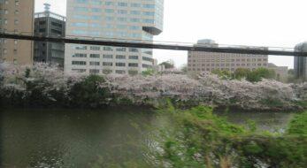 【総武線で車窓花見】市ケ谷~四ツ谷の区間で南側に続く外濠沿いの桜