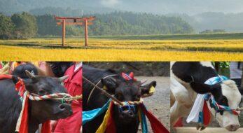 丑年にはコレ、牛が丸太をジャンプする!宮崎県えびの市「牛越祭」