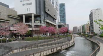 【ソラマチさくらまつり】東京スカイツリーの足元を彩る北十間川沿いの桜