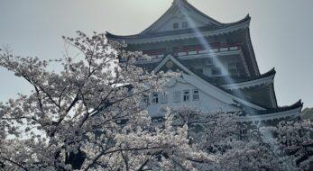 【静岡県熱海市】絶景パノラマを堪能出来る!熱海城と桜!現地レポート!