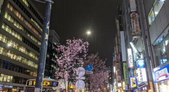 渋谷・恵比寿で桜は見れる?銭湯「改良湯」の桜イベントもご紹介