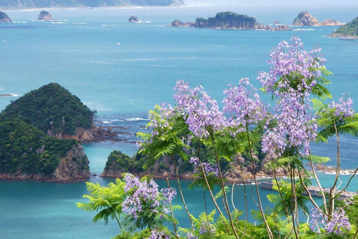 紫のシャワーを浴びてみたい!宮崎県日南市の『ジャカランダまつり』