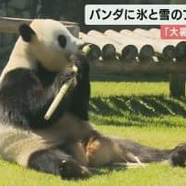 パンダに「氷と雪」のプレゼント…でも「竹」に夢中 アドベンチャーワールド