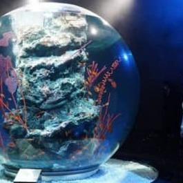 アートが彩る水族館 神戸に開業へ ウエスコ子会社運営 幻想的な空間