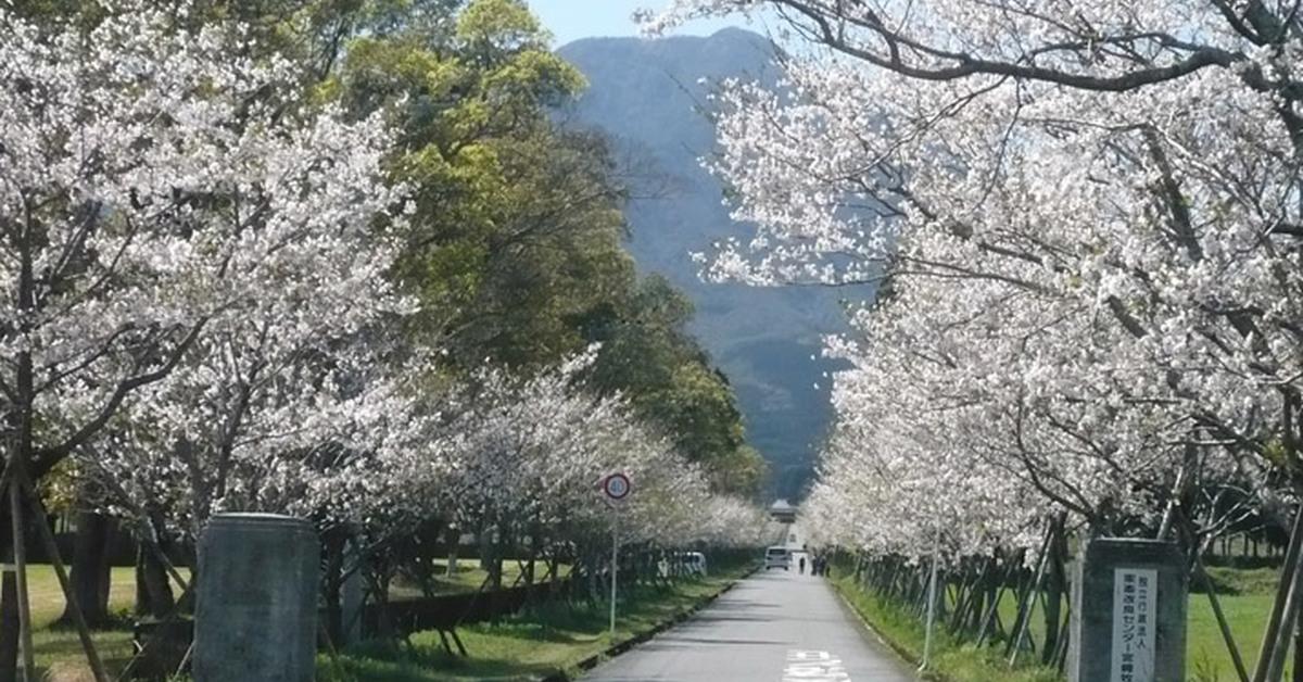 【2021年開催中止】まきばの桜まつり