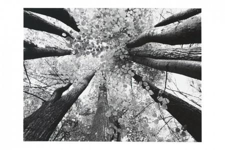 tree-tops-artwork-1582752599.jpg