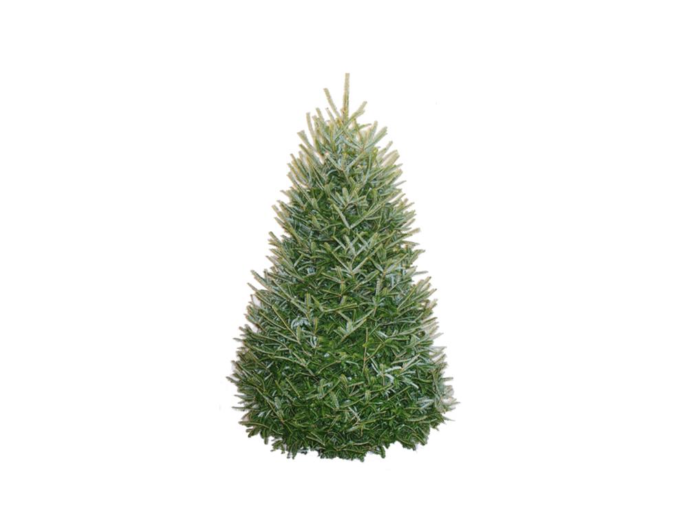 chicago christmas trees
